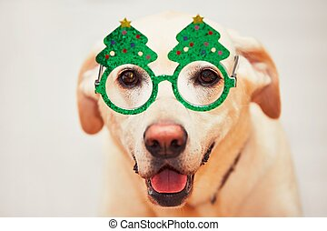 Christmas time with dog. Labrador retriver is wearing funny Christmas tree glasses