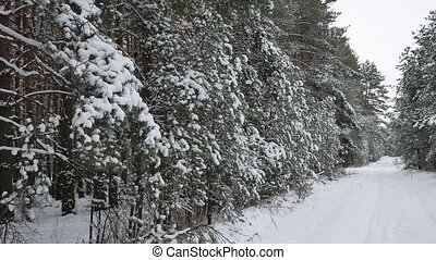 Christmas tree branch in snow pine winter fairy forest nature landscape