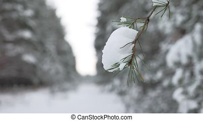 Christmas tree branch in snow winter nature forest beautiful landscape, blurred background