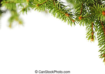 Christmas tree branch isolated on white background