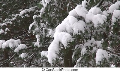 Christmas tree branches shaking, crumbling snow - Christmas...