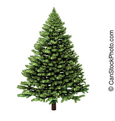 Christmas tree isolated on a white background without any decorations as a festive evergreen single plant with detailed pine needles for the holiday season including New Year.