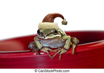 Christmas Tree Frog Sitting on Red Mug - ChristmasTree...