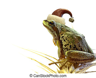 Christmas Tree Frog Sitting on Stalk of Wheat -...