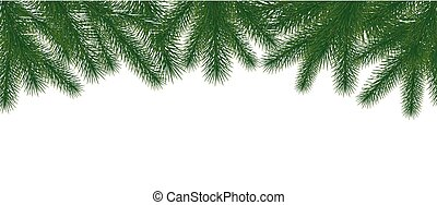 Christmas tree green branches on white background.