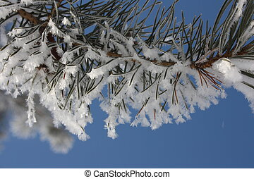 Christmas tree in the snow against