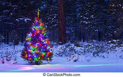 Christmas Tree in the woods at night with snow.