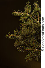 Christmas tree isolated on the black background