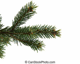 Christmas Tree Limb - Christmas tree limb isolated on a...