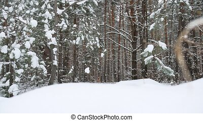 Christmas tree nature branch in snow pine winter fairy forest landscape