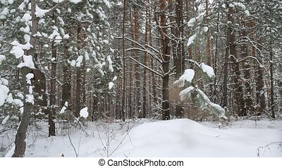 Christmas tree nature branch in snow pine winter fairy landscape forest