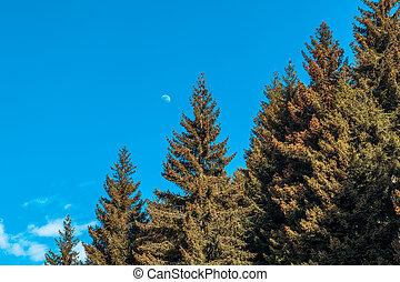 Christmas tree on a blue sky background
