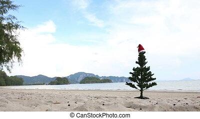Christmas tree on the beach