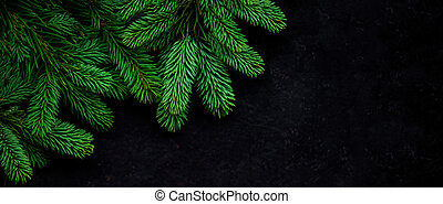 Christmas Tree Pine Branches on black background. View from...