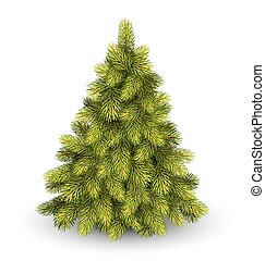 Christmas Tree Pine Isolated on White