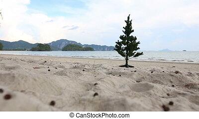 Christmas tree standing on the beach