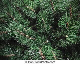 Christmas tree texture background