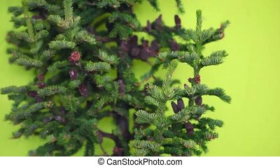Christmas tree with cones without toys  on a green background. not decorated