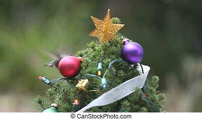 Christmas tree with hummingbird - hummingbird finds food at...