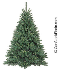 Christmas tree without ornaments