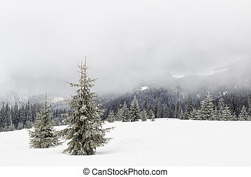Christmas trees in the mountains