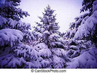 Christmas Trees under Beautiful Snow Cover. Winter Landscape...