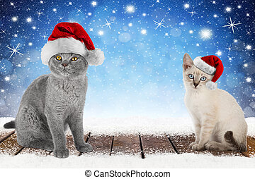 christmas xmas background with 2 cute kitten