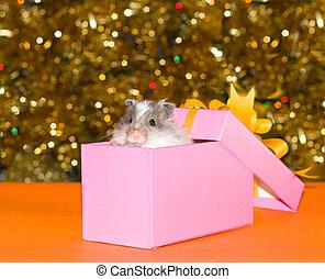 Christmas\\\'s gift