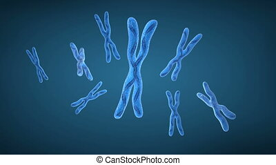 chromosom, x, und, dns, strähnen