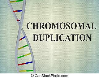 Chromosomal Duplication concept - 3D illustration of...