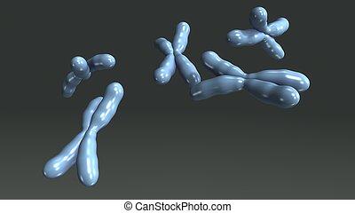 chromosomes_perspective