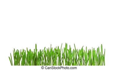 chronocinématographie, herbe, croissant, vert