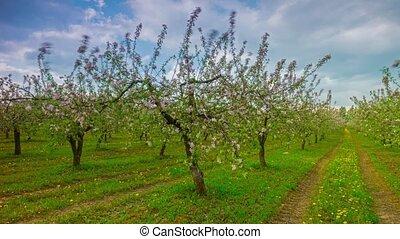 chronocinématographie, jardin, pomme