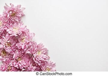 chrysanthème, bourgeons, blanc, floral, fond, frontière, arrière-plan.