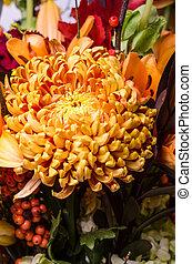 chrysanthème, fleur, bronze, arrangement