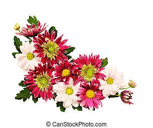 chrysanthème, fleurs, coin