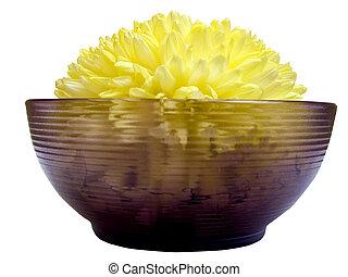 Chrysanthemum 5