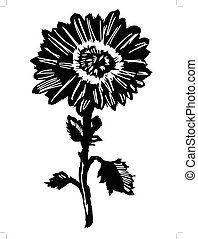 chrysanthemum - silhouette of chrysanthemum