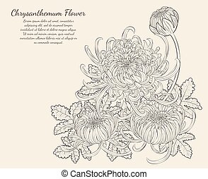 Chrysanthemum Flower from hand drawing.