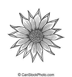 Chrysanthemum flower illustration, line pattern. Vector...