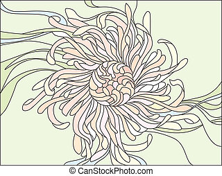chrysanthemum flower with delicate petals