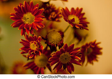 A picture of some nice and bright autumn flowers chrysanthemum. Can be used for different sorts of postcards