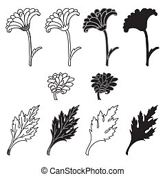 Chrysanthemum flowers and leaves