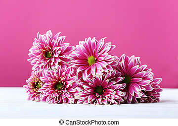 Chrysanthemum flowers on a pink background