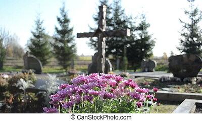 chrysanthemum grave cross - chrysanthemums flowers grow on...