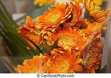 Chrysanthemum or Florist's Mun or mums flowers