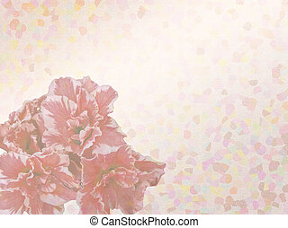 chrysanthemum with set of abstract painted background