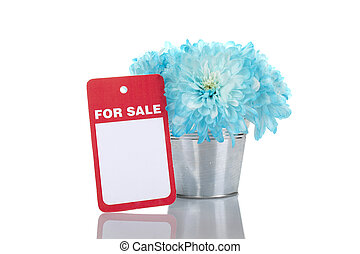 Chrysanthemums in a pail for sale
