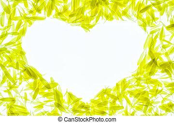 chryzantéma, okvětní lístek