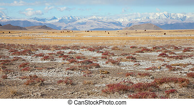 Chu steppe, a wonderful place on the border of Mongolia and...